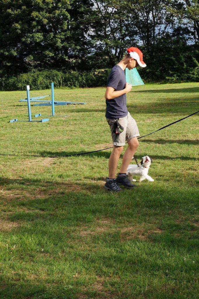 Puppy cursus leren volgen